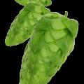 Ahtanum humleplante